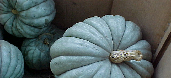 A Blue Squash in a Pumpkin-Colored World